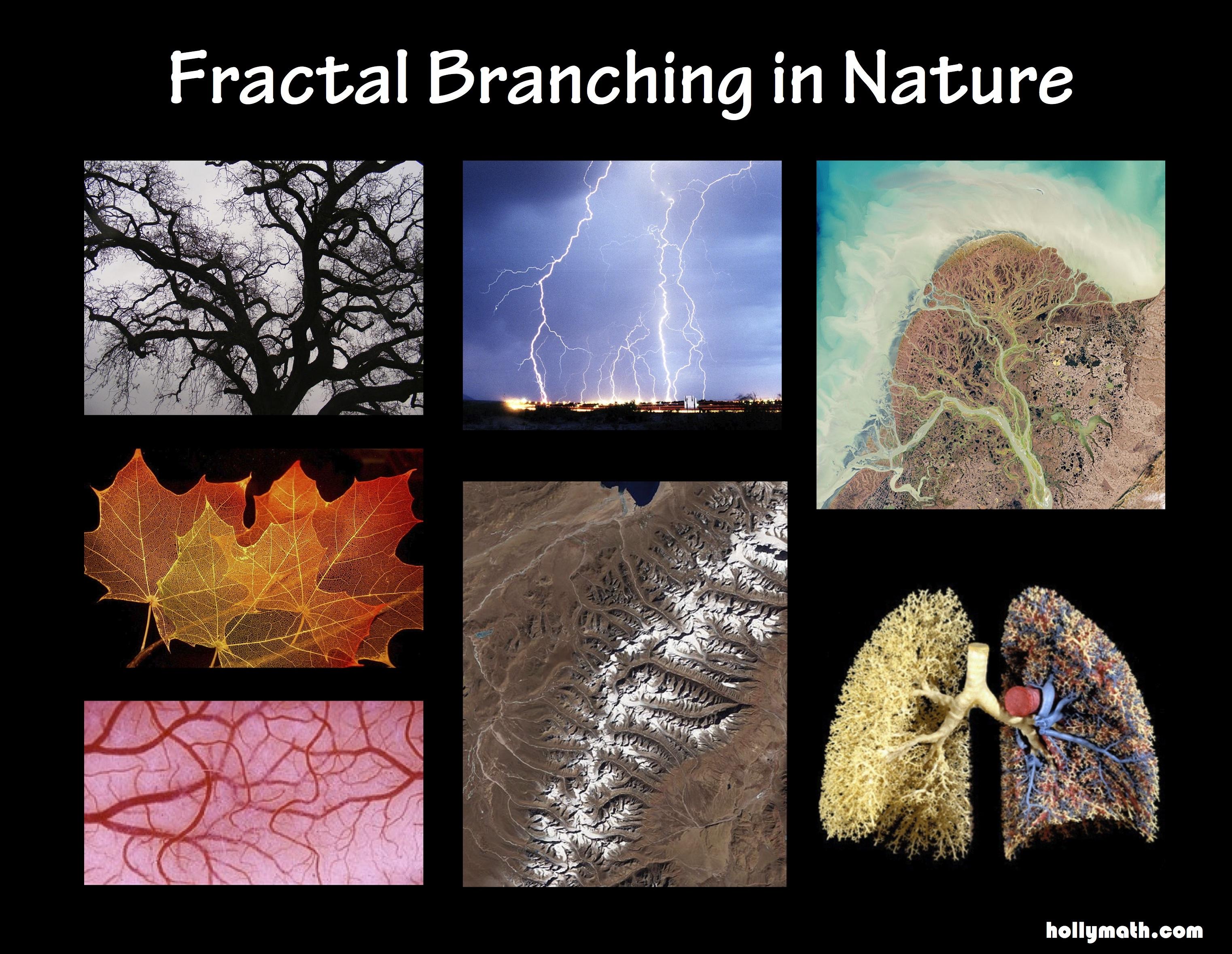 Fractals | hollymath